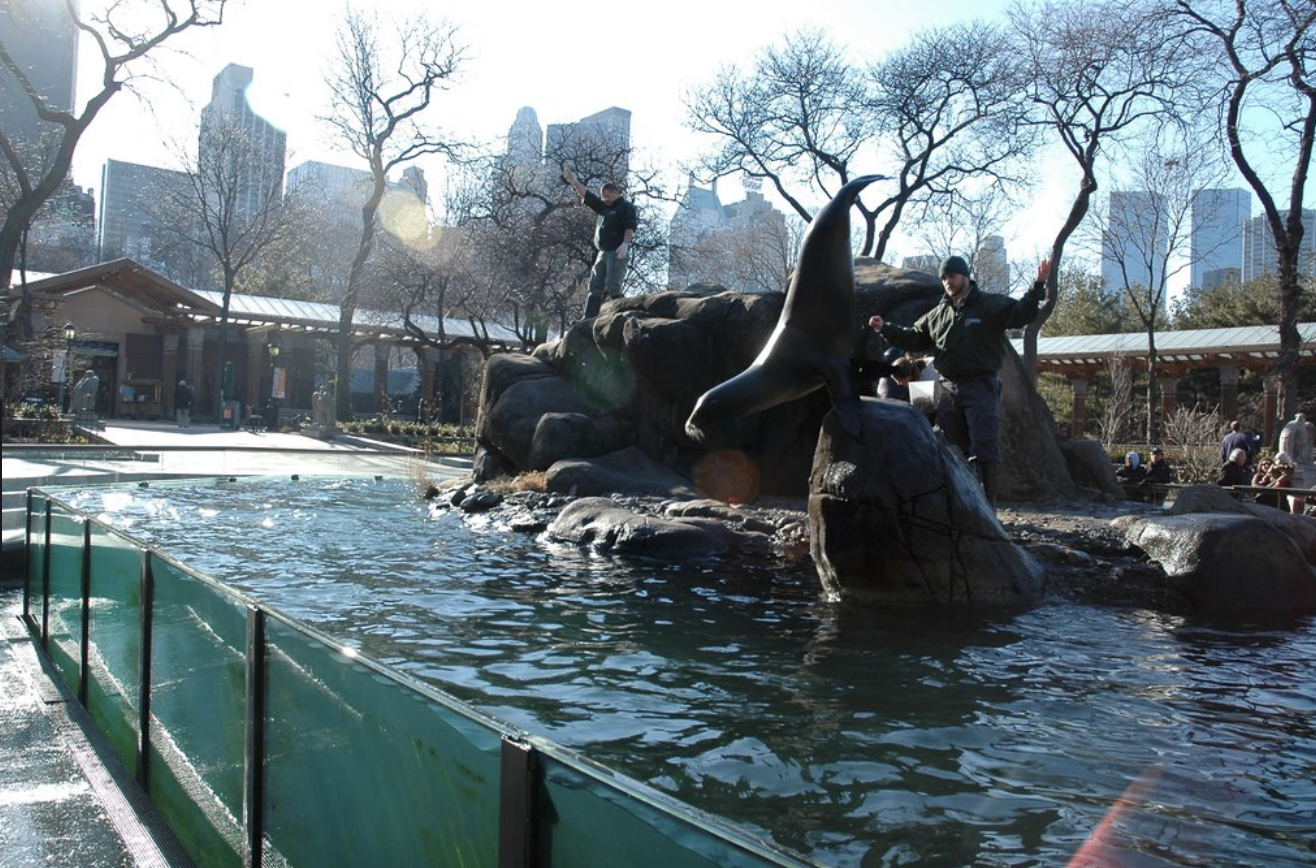 Central Park Zoo Top Activities in Central Park