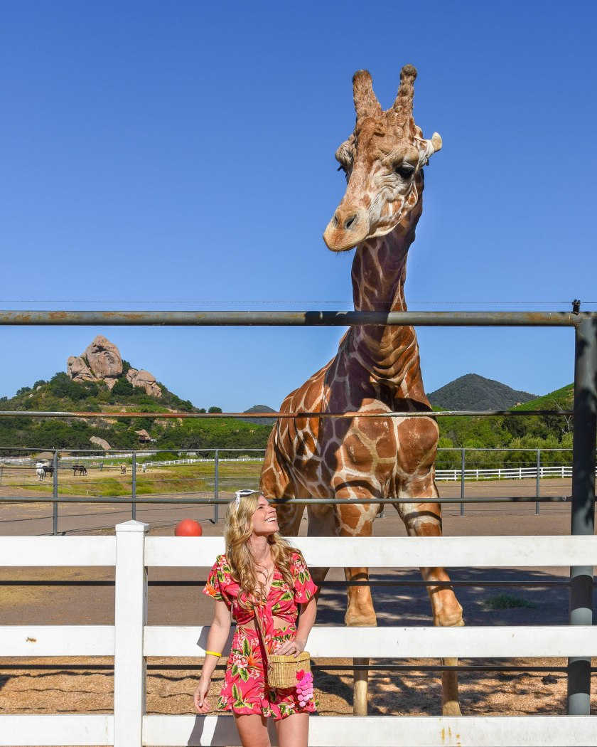 Malibu Wines Safari Travel Guide to Los Angeles Stanley the Giraffe